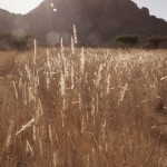 Gras in Afrika...