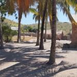 Palmen mitten im Dorf